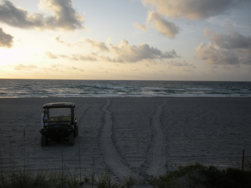 sea turtle tracks and staff off road vehicle on beach