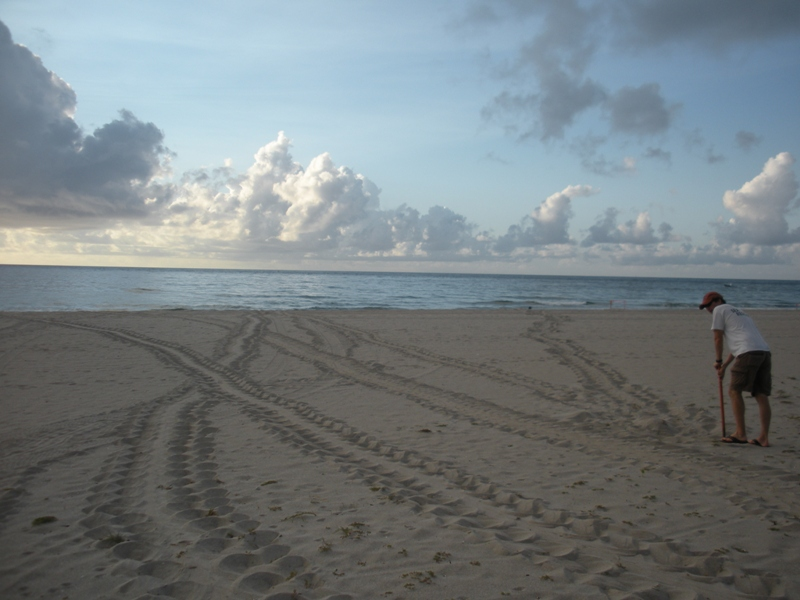 several sea turtle tracks and a marine turtle specilaist working on beach