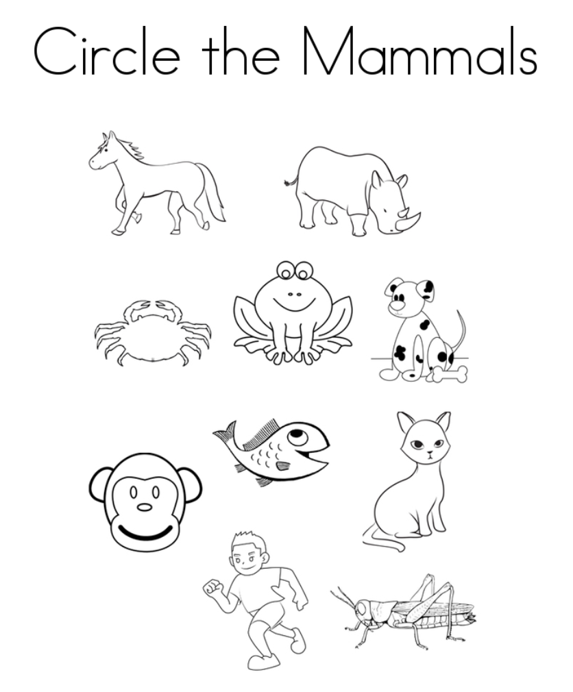 Circle the Mammals Activity
