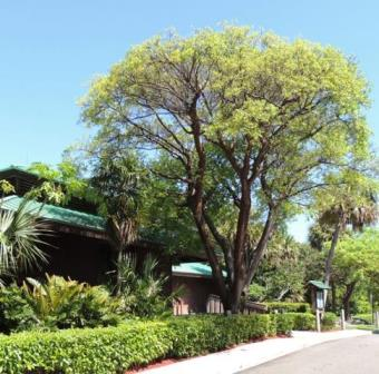 gumbo limbo tree and nature center building