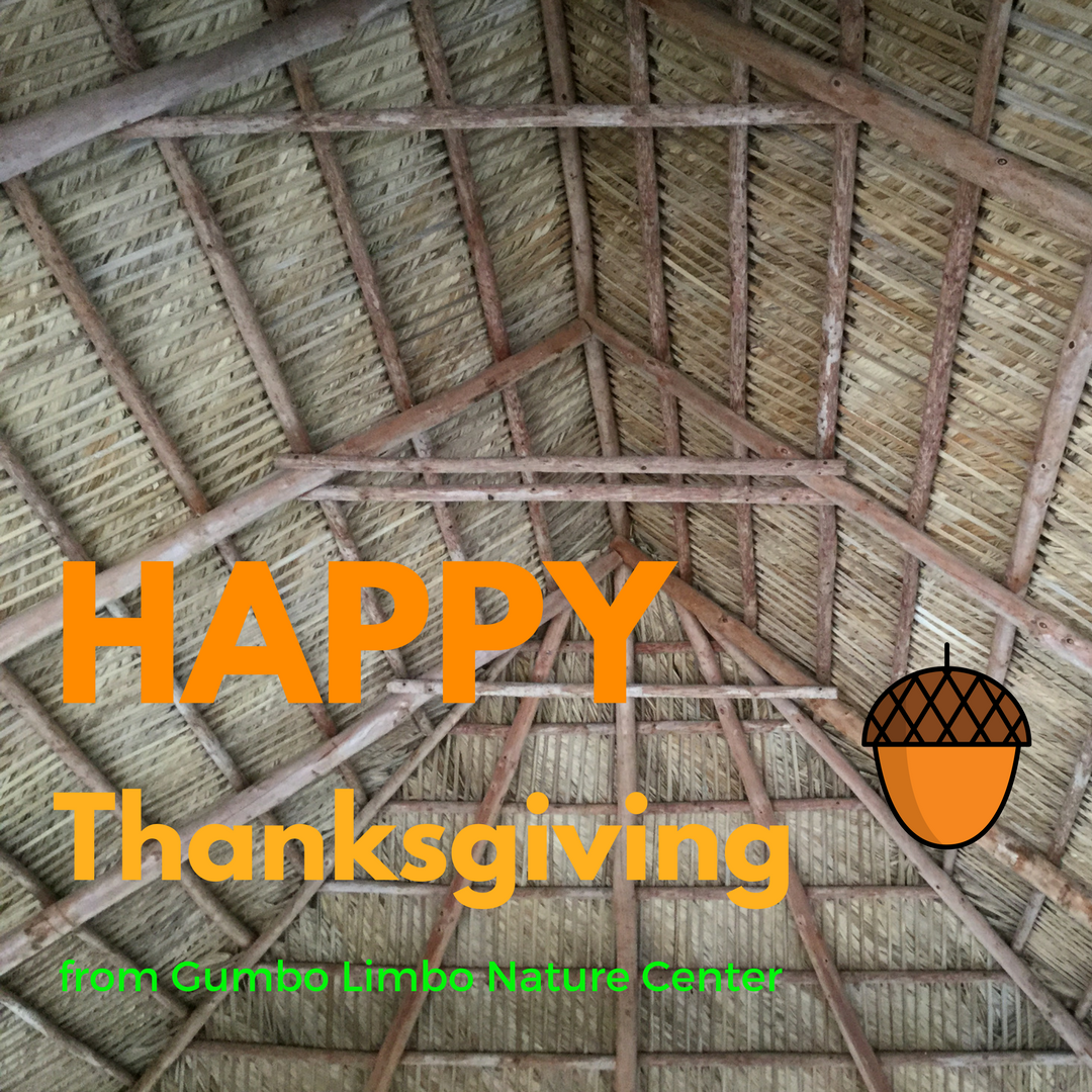 Happy Thanksgiving from Gumbo Limbo Nature Center