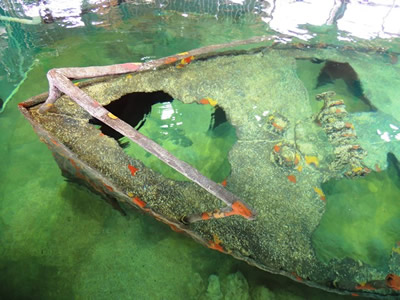 shipwreck in deel aquarium