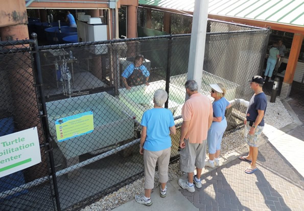 visitors viewing sea turtles in small rehabilitation tanks