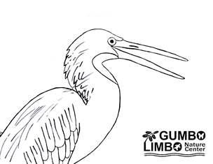 bird - heron - coloring page