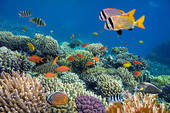 tropical fish swimming over a coral reef