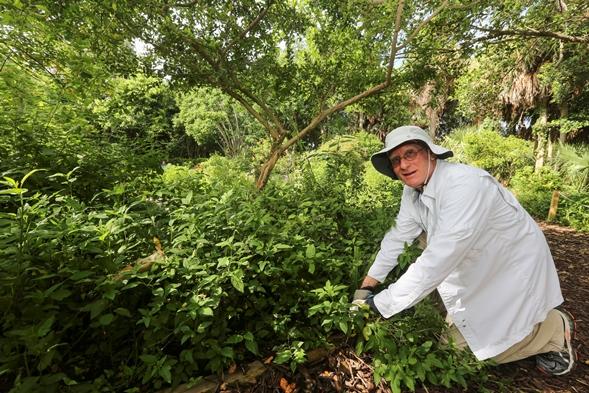 Volunteer working in Butterfly Garden