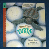 cover of children;s book with sea turtle drawing