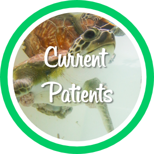 Open current patients webpage.