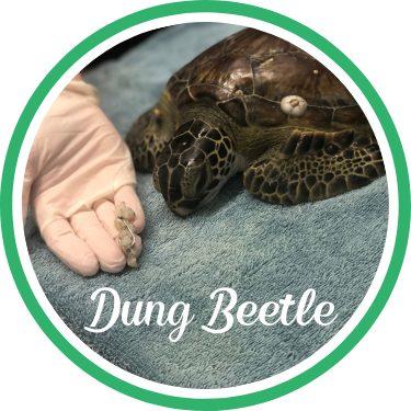 Open Dung Beetle's sea turtle patient profile.