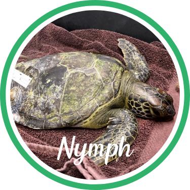 Open Nymph's sea turtle patient profile.