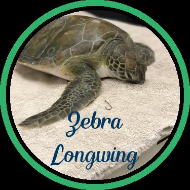 Open Zebra Longwing's patient page.