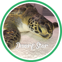 Open Dwarf Star's sea turtle patient profile.