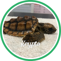Open Krypto's sea turtle patient page.