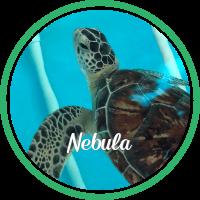 Open Nebula's sea turtle patient profile.