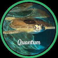Open Quantum's sea turtle patient profile.