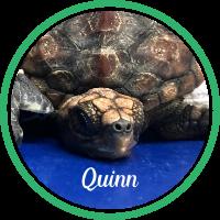 Open Quinn's sea turtle patient profile.