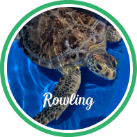 Open Rowling's sea turtle patient profile.