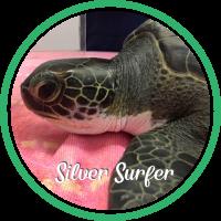 Open Silver Surfer's sea turtle patient profile.