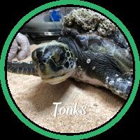 Open Tonk's sea turtle patient profile.