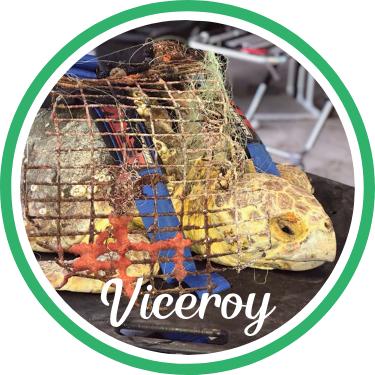 Open Viceroy's sea turtle patient profile.