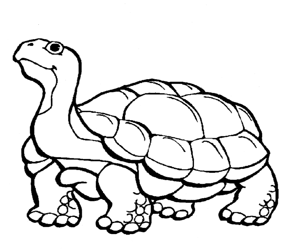 Gopher_Tortoise_Coloring