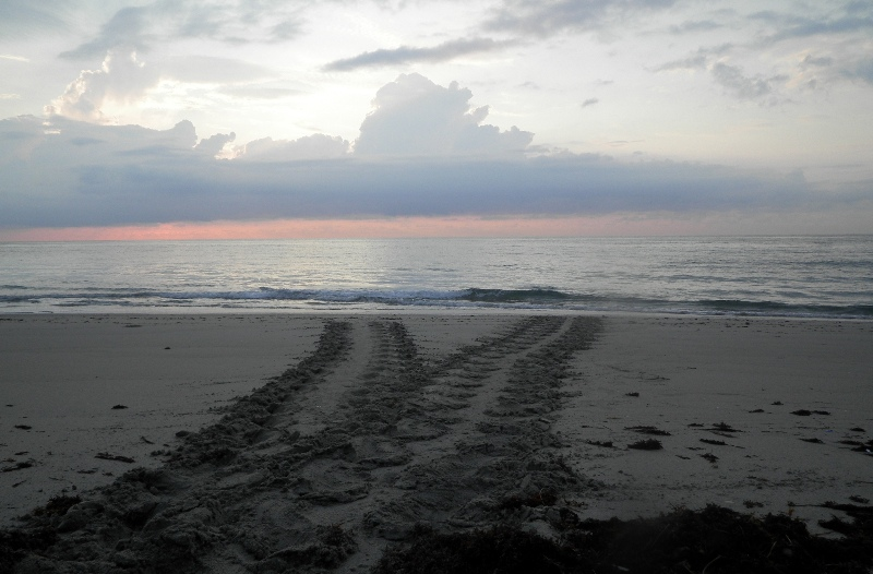 sea turtle track on beach
