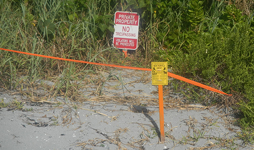 A stake with a sign on it marking a sea turtle nest laid in vegetation.
